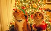 Новогодние котики!