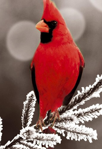 Links to Past Resilient Cardinal Newsletters