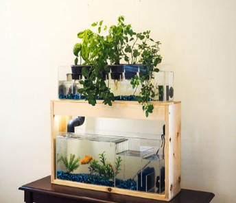 How You Can Attend Aquaponics Diy With Minimal Budget