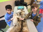 This is an entire gray wolf!  Whoa!!