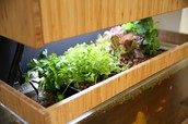 10 Signs You Should Invest in Aquaponics Tank