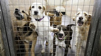 doggies in shelters