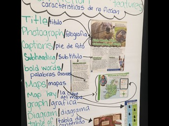 Bilingual Nonfiction Text Features Poster