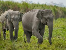 Virtual Field Trip: Elephant Sanctuary