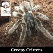 Animal Encounters: Creepy Critters