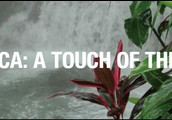 2020 - Costa Rica - A Touch of the Tropics (10 days)