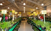 Save The Date:  Master Gardener Plant Sale Scheduled for May 20, 2017