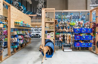 Outstanding New Dog Stores Include A large number of Dog Merchandise