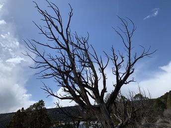 Dead Tree #14c by Mr Stucki