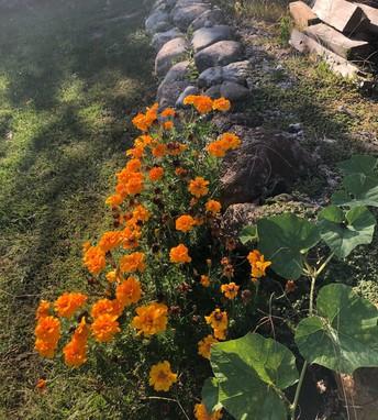 Flowers moving rocks!