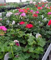 FFA Plant Sale