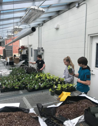 Our Greenhouse is Filling Up!