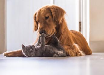 Companion Animal Challenge