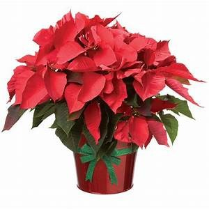 Stay tuned for information about Poinsettia sales for Christmas