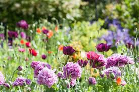 5/30 - Garden Help Wanted, Merryall