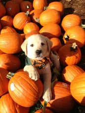 Pups and Pumpkins Open House at Spruce Run