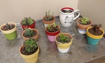 EcoClub Sells Succulents