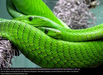 i like snakes