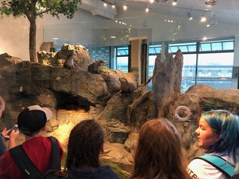 6th graders at the aquarium!
