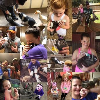 Wildlife Rehabilitation & Rescue