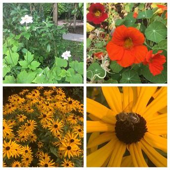 Fall Garden Clean-up: October 6