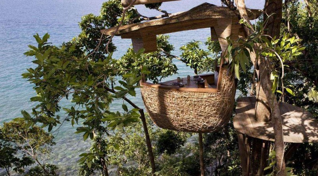 Tree-top dinner table