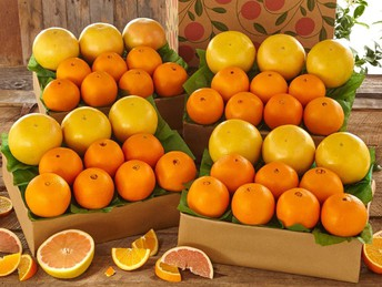 Fersters Fruit Sale