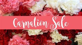 Last Week for Carnation Sales