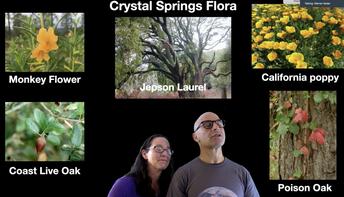 Crystal Springs Flora