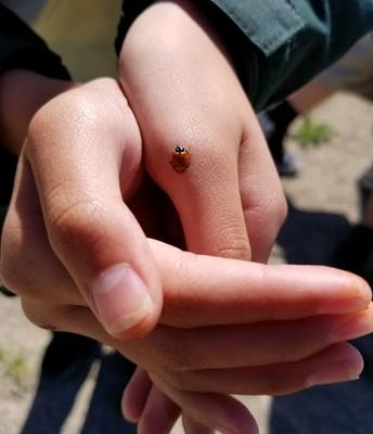 3rd-5th Graders Saving Ladybugs!