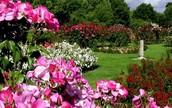 Municipal Rose Garden