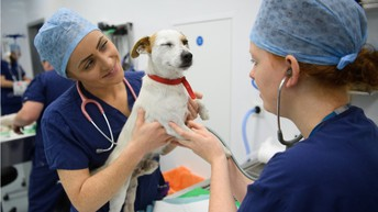 FEATURED CAREER OF THE WEEK:                                                     Veterinary Technologist and Technician