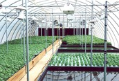 The Opportunities In Central Issues Of Types Of Hydroponic Grow System