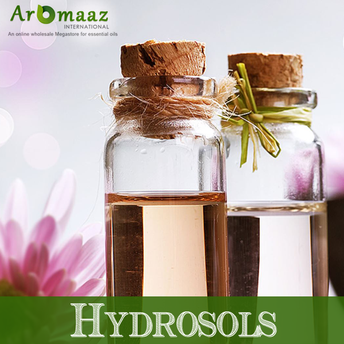 Aniseed Hydrosol – Benefits and Uses