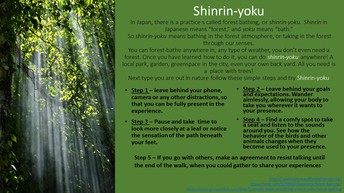 Shinrin-Yoku.