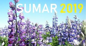 Leikjanámskeið sumarið 2019