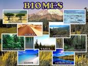 Biomes & Biodiversity