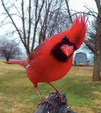 Cardinal Cards and Rewards
