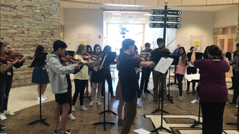 Gators of the Week:  Orchestra Students Shine at State Competition
