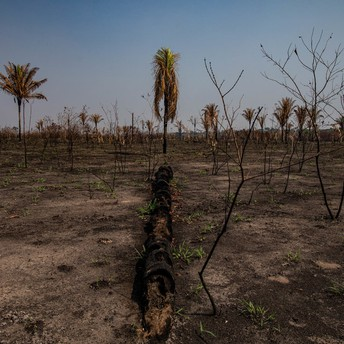 'It's Really Close': How the Amazon Rainforest Could Self-Destruct