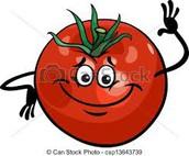 השפעת ריכוז מוהל העגבנייה על קצב נביטת זרעי העגבנייה: