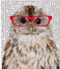 [stock photo of owl]