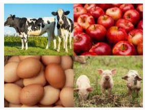 Farm Food 360