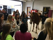 A Visit from Mounted Patrol