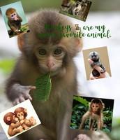 Monkeys 🐒 are my mom's favorite animal