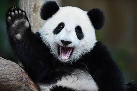 #PandaSpirit