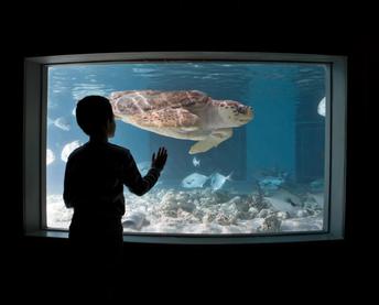Sensory Friendly Saturday at the Maritime Aquarium