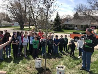 4th grade saplings