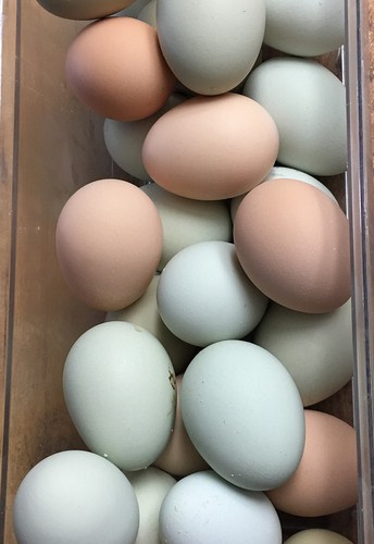 What's going on with the Eggs?
