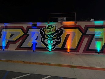 Panther under the lights